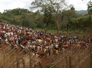 Cattle market in Laska