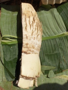 Half an enset tuber