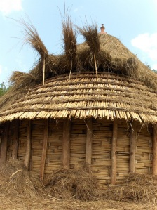 Baskeet house half-thatched