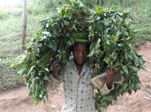 Baskeet boy carrying potato leaves