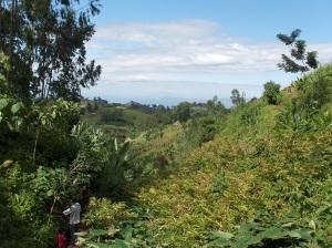 Basketo Special Woreda: Kororima plantation