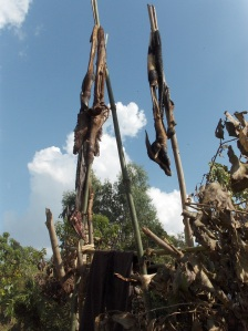 Untanned goat skin hung up at the gate to a mortuary (Basketo Special Woreda, Ethiopia)