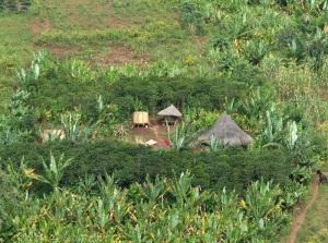 Baskeet farm (Picture taken in the Sheel-Kanibol neighbourhood)